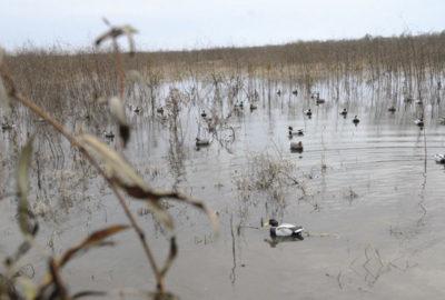 Duck Season is Upon Us